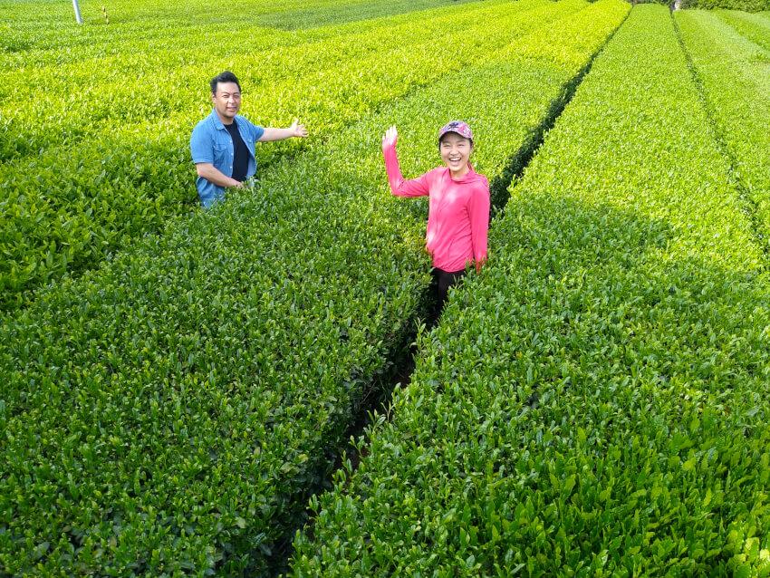 tea-farm-miyanoen-210604